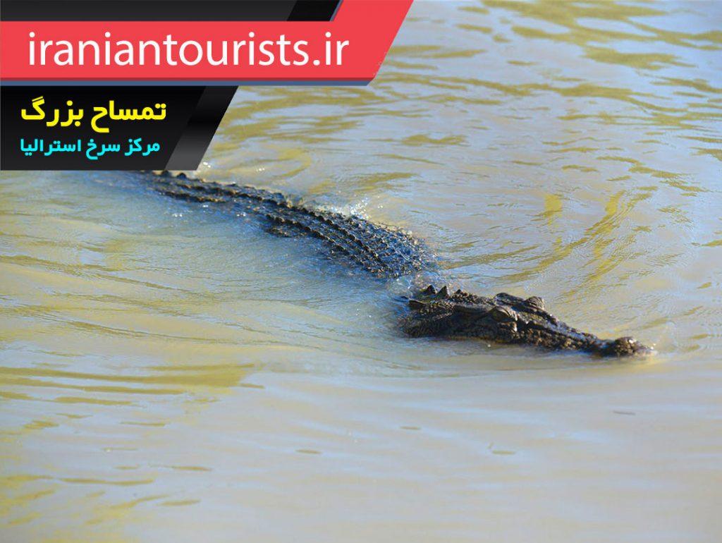 تمساح بزرگ مرکز سرخ استرالیا