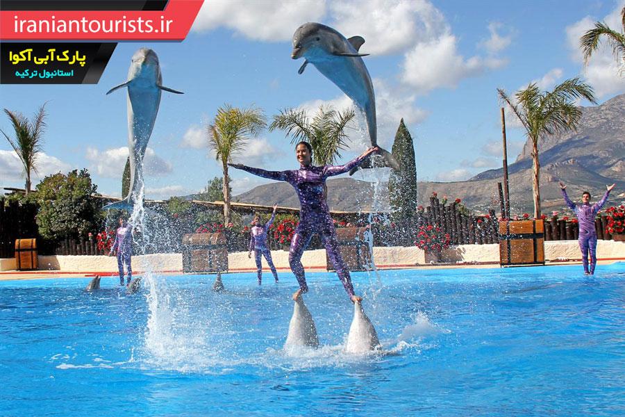 پارک آبی آکوا دلفین استانبول ترکیه