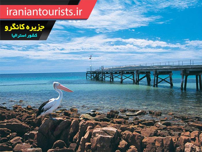 تصویری زیبا از پلیکان در ساحل جزیره کانگرو کشور استرالیا