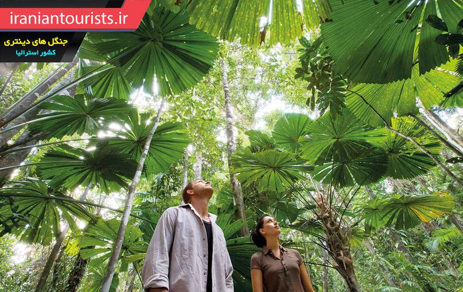 بازدید گردشگران از جنگل های بارانی دینتری