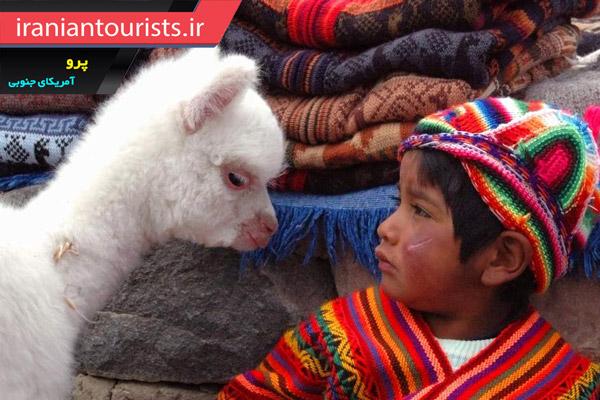 آلپاکا، جانوری اهلی و دوست داشتنی در کشور پرو