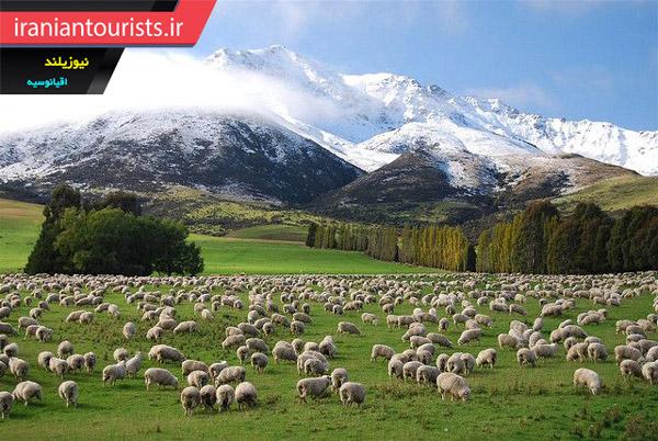 چراگاه های نیوزیلند، از مقاصد گردشگری محبوب در جهان